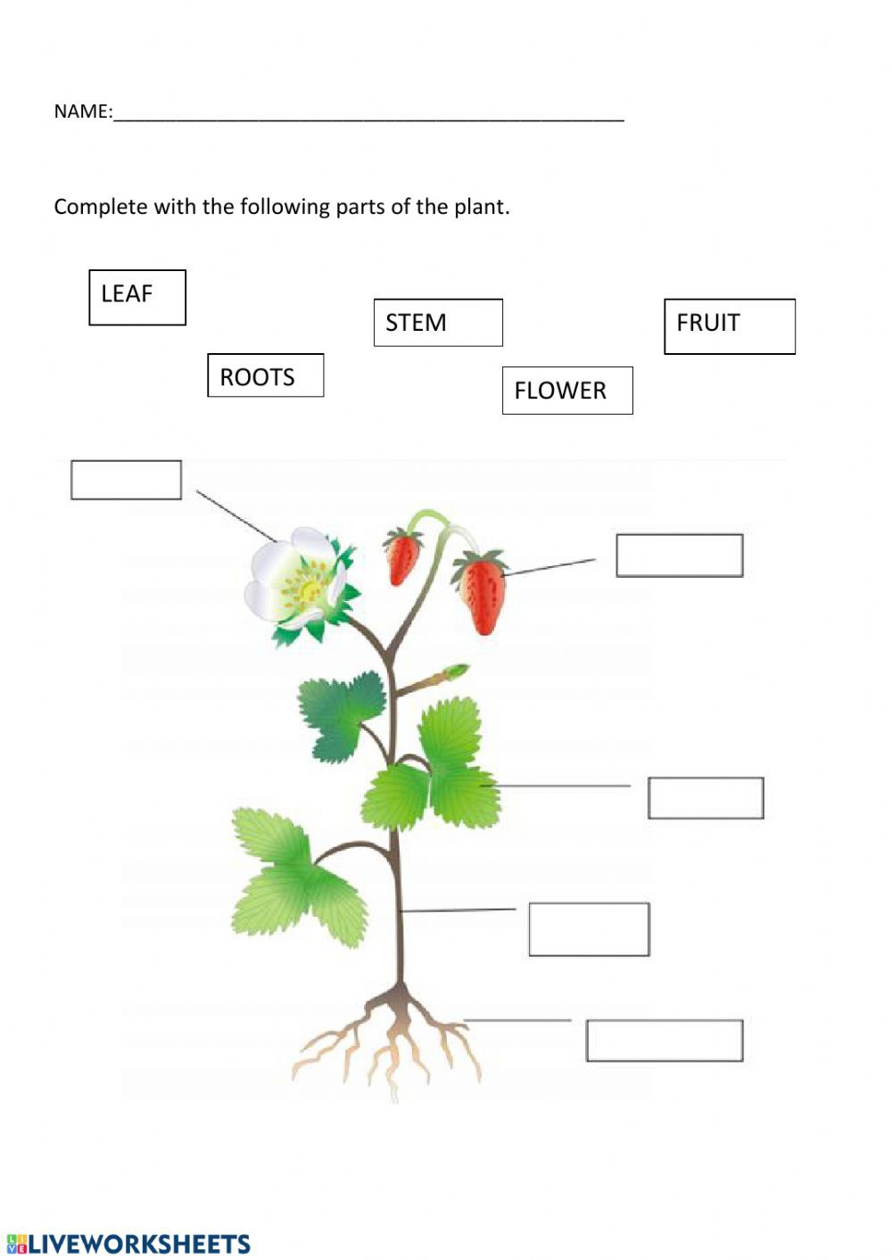 Plants Interactive And Downloadable Worksheet You Can Do The Exercises Online Or Download The Work 1st Grade Worksheets Plants Worksheets 2nd Grade Worksheets