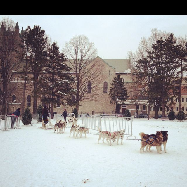 Dog Sledding At The Ottawa Winter Carnival At University