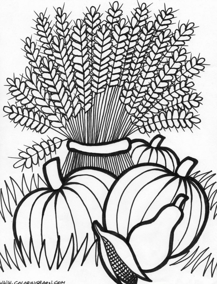 cornucopia coloring page google search