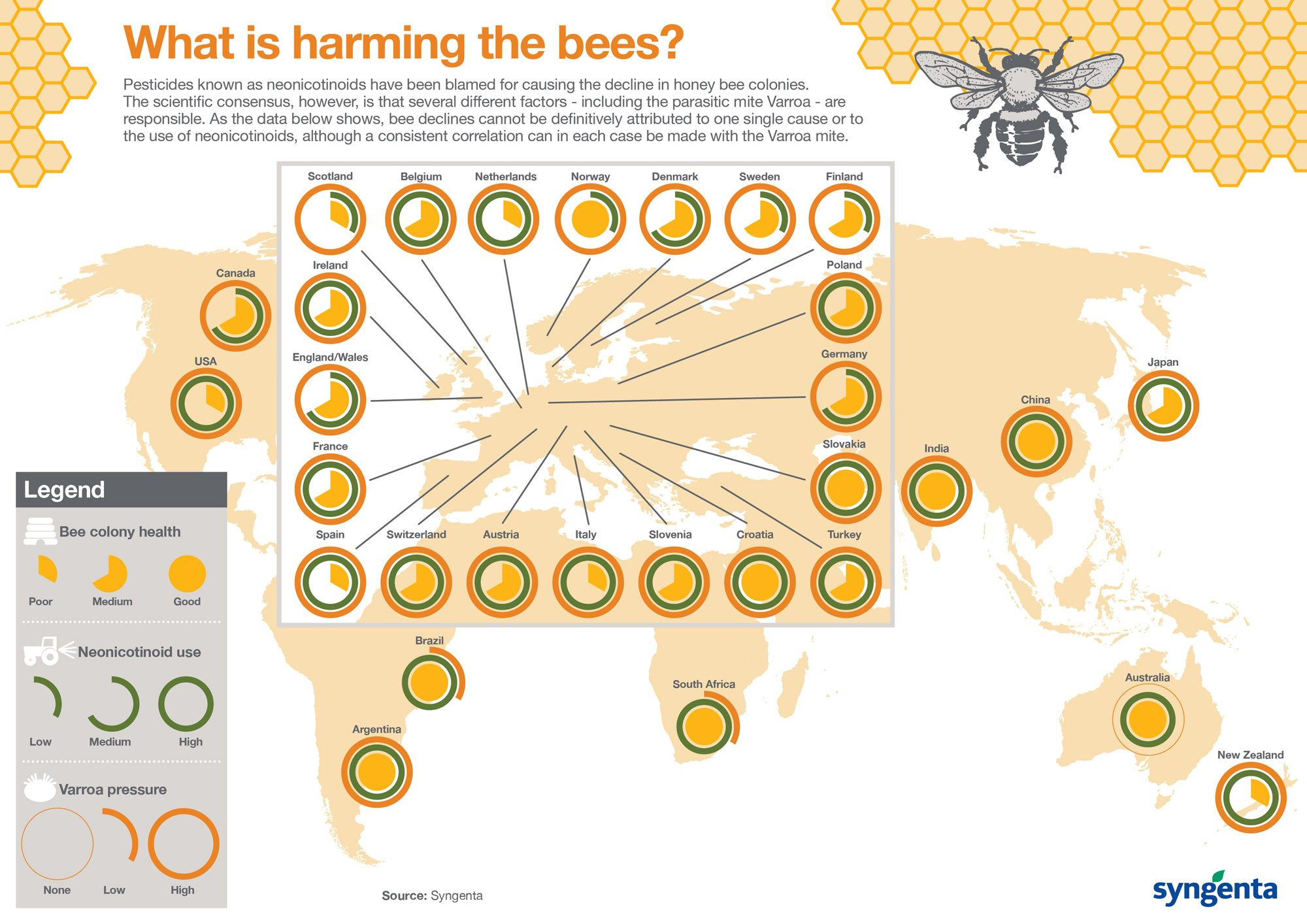 Why we can stop panicking about the honeybees