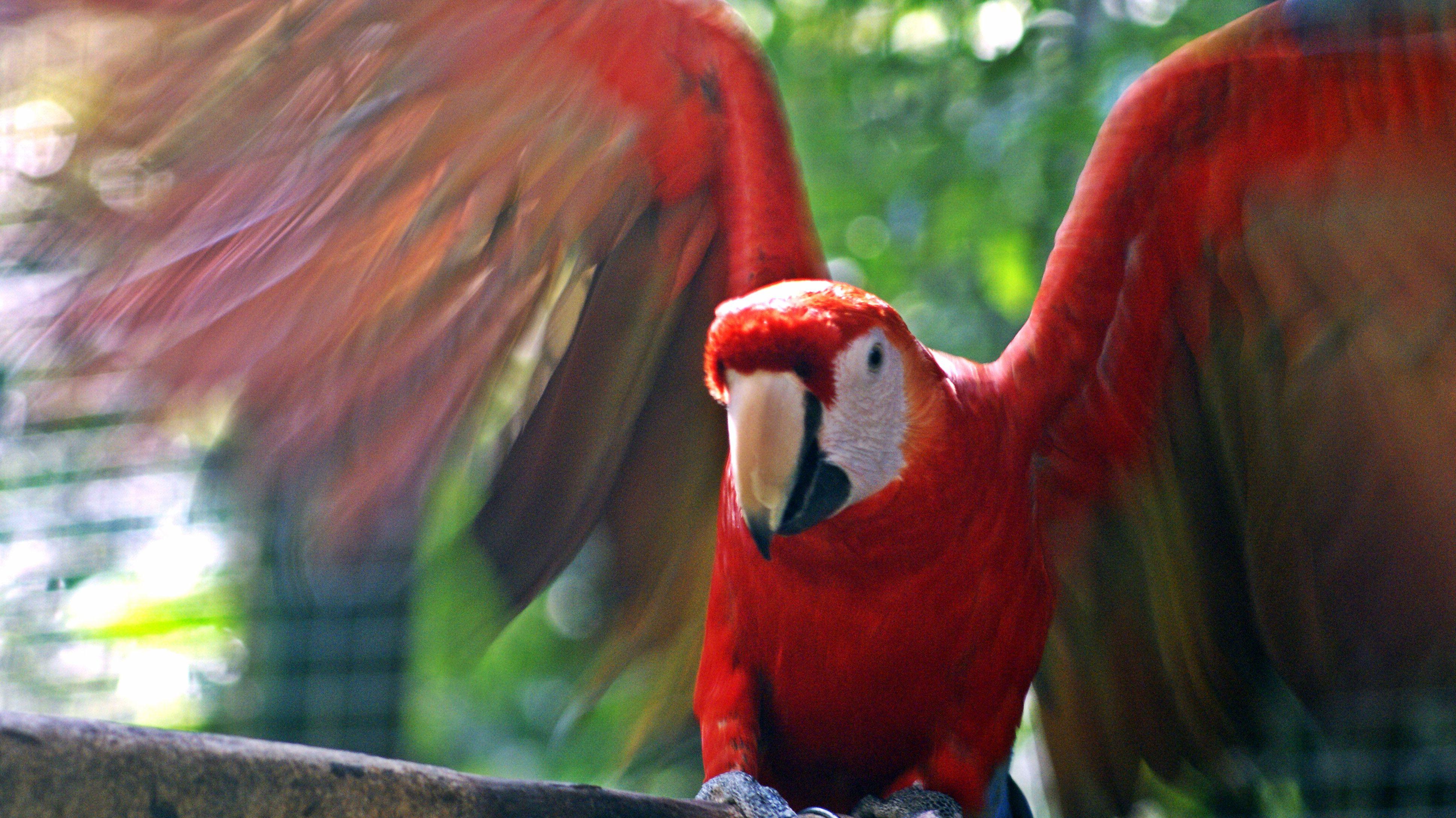 Encontrado en tumblr, tomado por Sem Brignoli en el parque de aves de Copan.