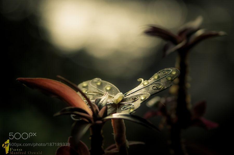 FOTO-OSWALD Impressionen by ManfredOswald