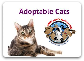 P L U T O Rescue Of Richmond County Cat Adoption Richmond