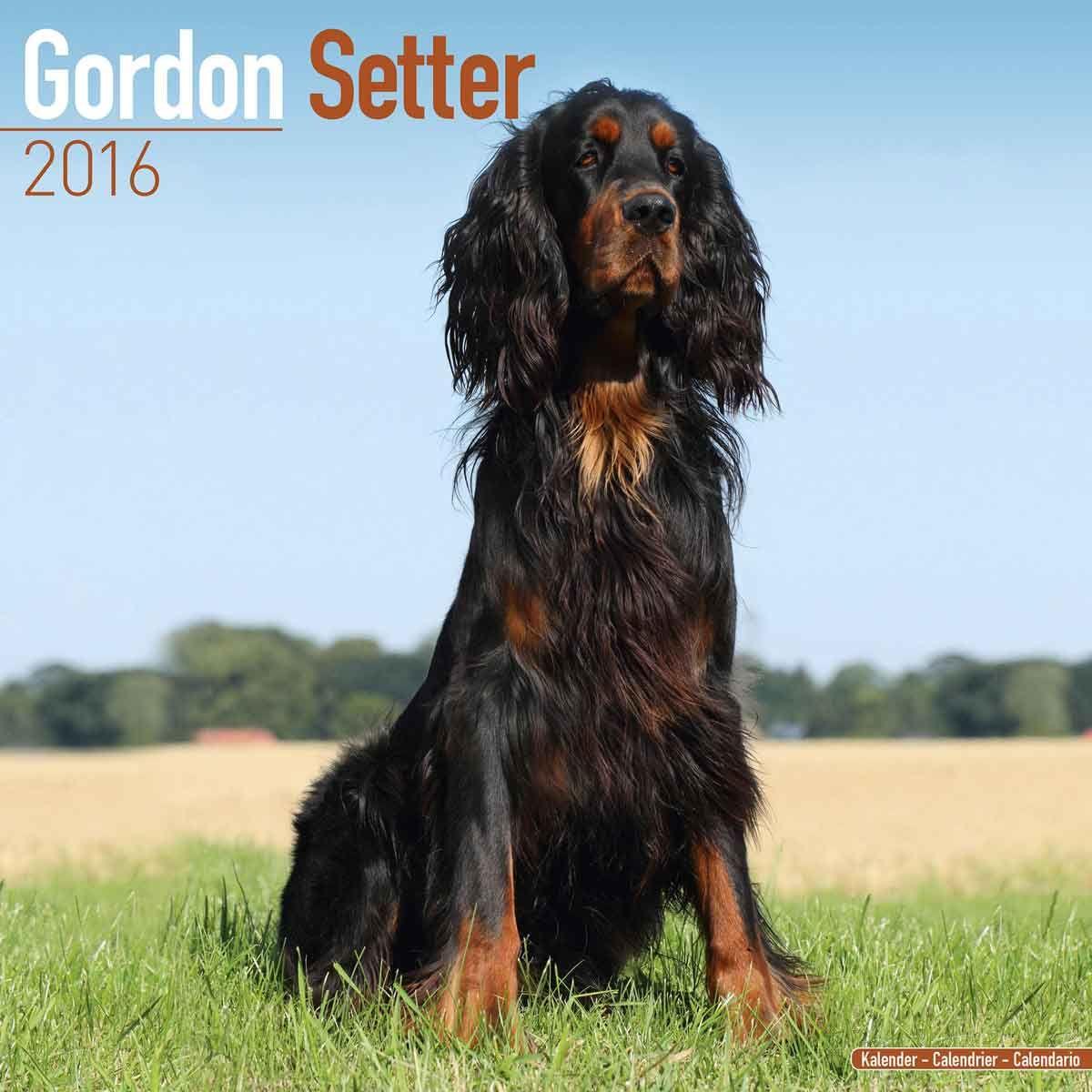 Gordon Setters Calendar 2016 Gordon setter, Dogs, Calendar