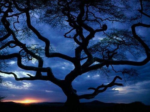 lone tree #sunset