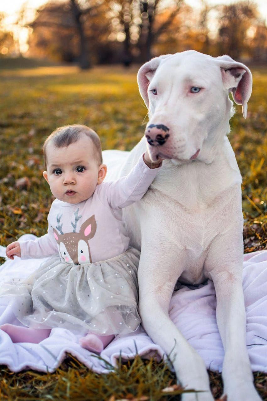 Baby Mobile Dogs Baby Dogs Great Dane Puppy Dogs Kids Merle