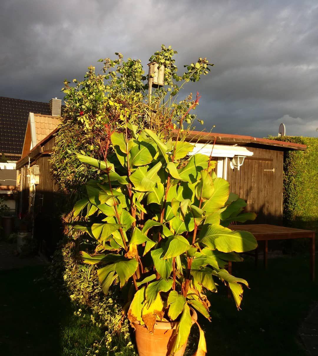 Gruseliges Licht Draussen Das Braucht Keinen Filter Oder Wolken Heute Im Altenburgerland Thuringen Thuringia Nubes Instagram Instagram Posts Garden