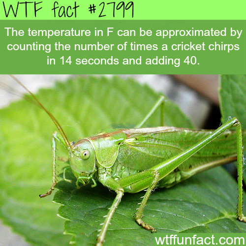 Crickets Chirping Meme Download