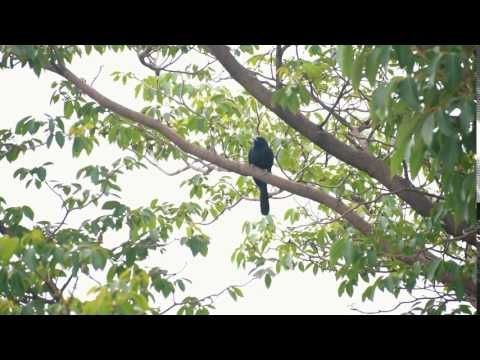 Naya Bhojpuri Gana Video: Latest Bhojpuri Song 'Raja Dhake Dabaile Kora' Sung By Sajan Manish