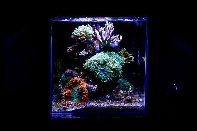 Enigma70x7 39 s 7 5 gallon cube nano reef aquarium ideas for Aquarium recifal nano