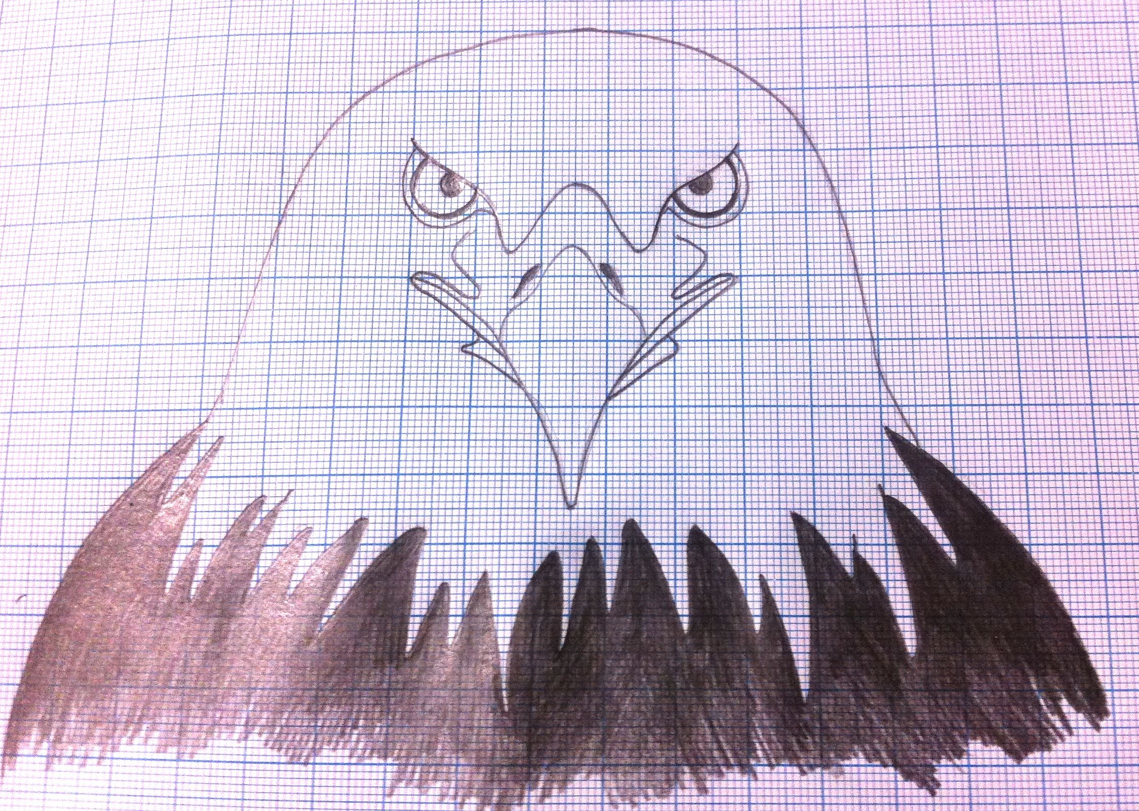 Bald Eagle Graph Drawing I M Really Loving The Graph Paper Makes My Proclivity For