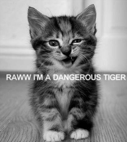 Rawww i'm a dangerous tiger !
