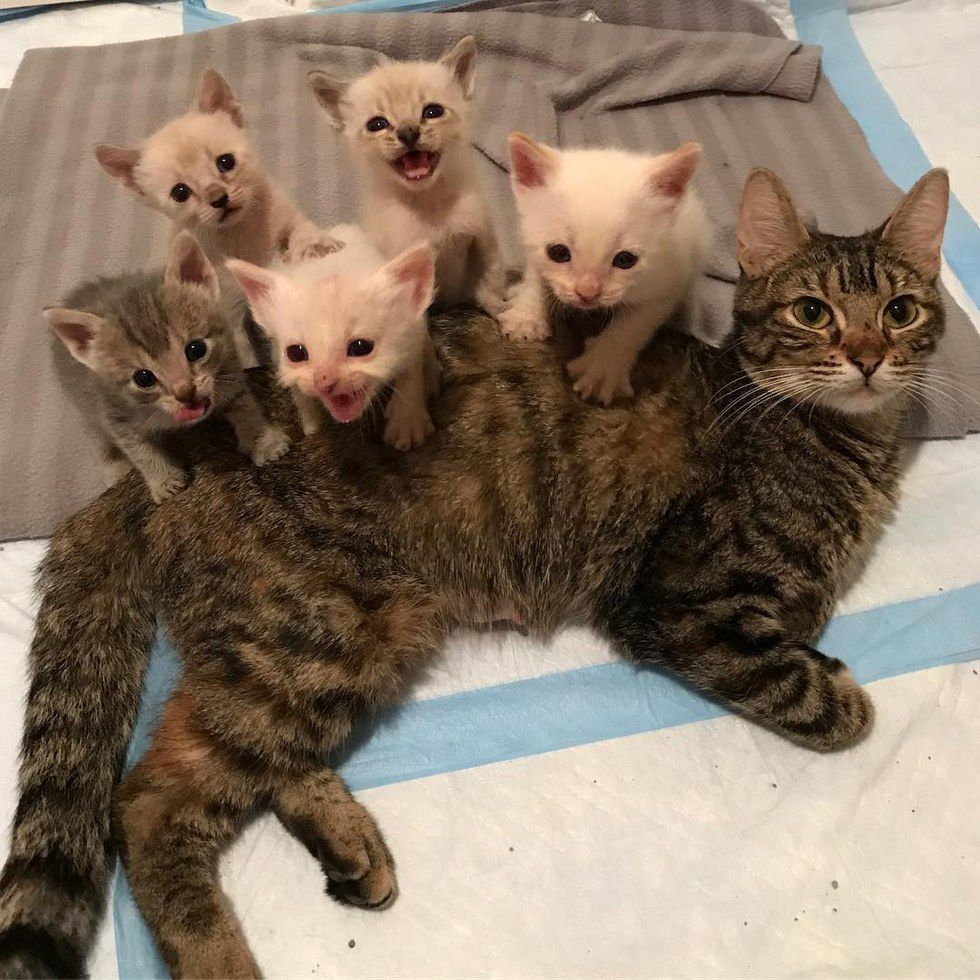 A Stray Tabby Gave Birth To Five Tiny Kittens In A Shed She Stayed Awake For Days Caring And Protecting Her Babies Baby Animals Cats And Kittens Cute Animals