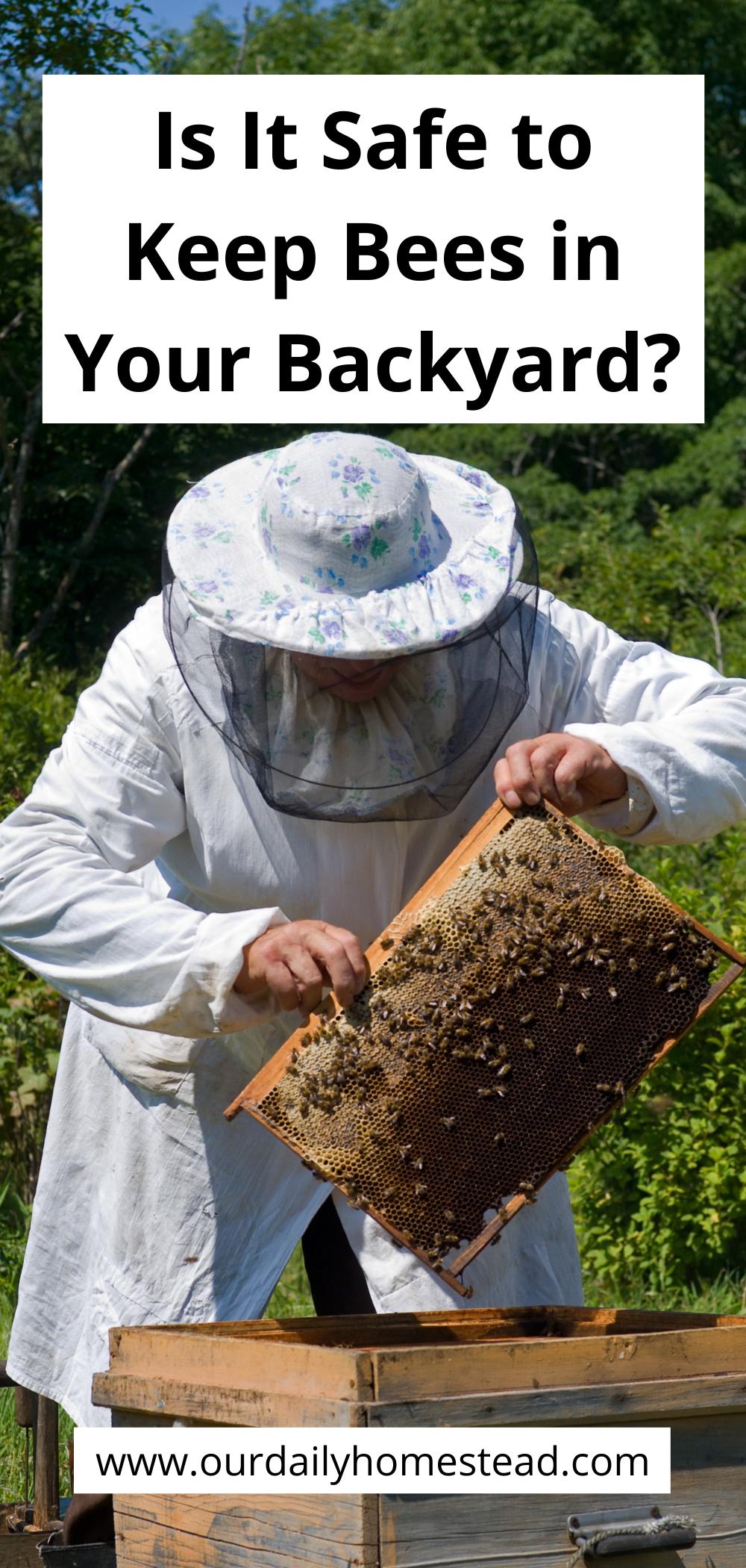 Beekeeping For Beginners Is It Safe To Keep Bees In Your Backyard In 2021 Beekeeping For Beginners Backyard Bee Keeping