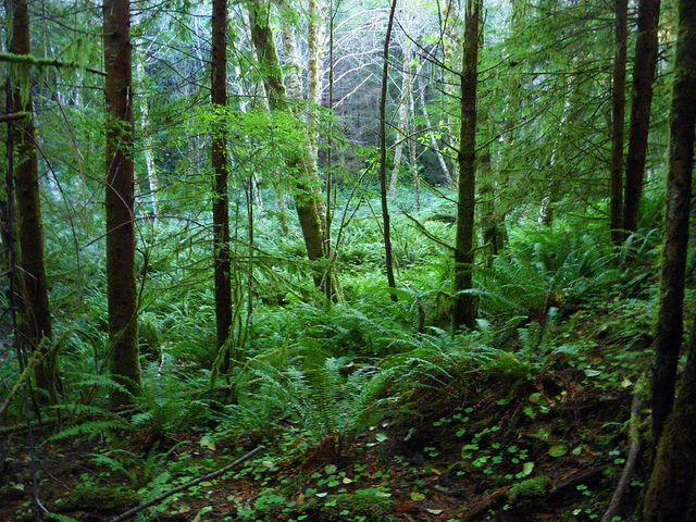 forest | red alder ranch | Sept 30 2010