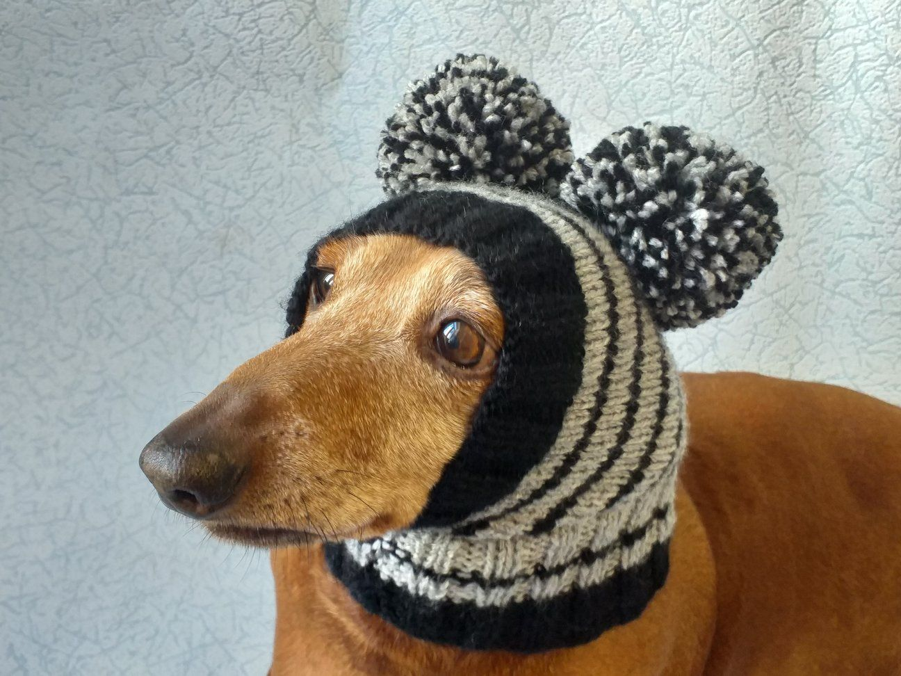 Striped knitted hat for dachshund or small dog. in 2020