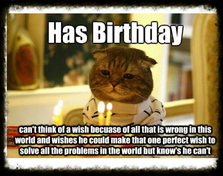 Happy Birthday Cat Birthday Memes Happy Birthday Cat Happy