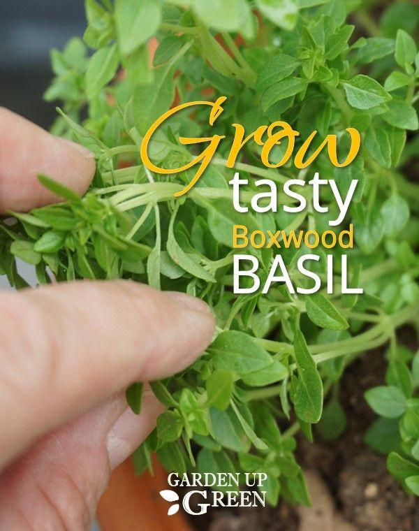 Pin On Startle Garden Herbs