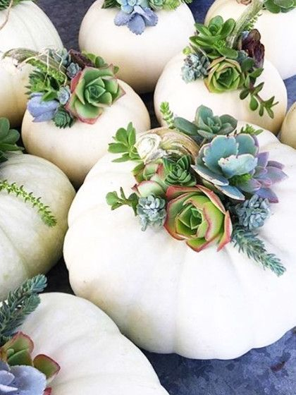weißer Kürbis als Vase für Blumengesteck. Herbstliche Dekoidee für den Tisch, oder Draußen im Hauseingang. Herbstlicher Blumenstrauß mit Kräutern und frostfesten Pflanzen. #herbstlichetischdeko