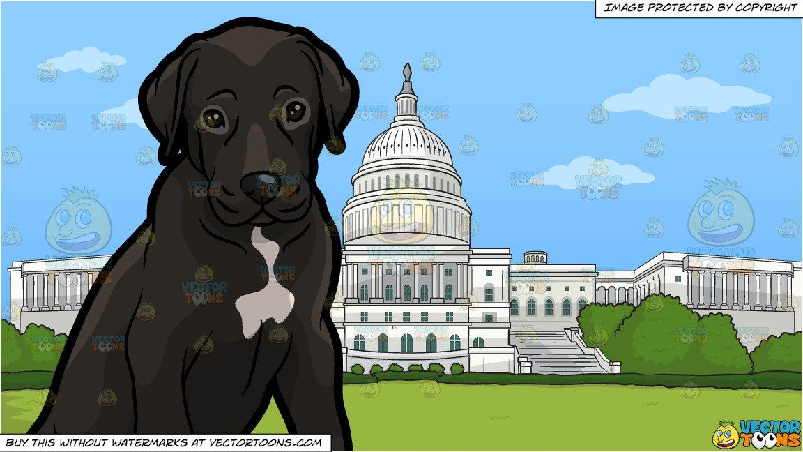 A Cute Great Dane Puppy And The Us Capitol Building Background