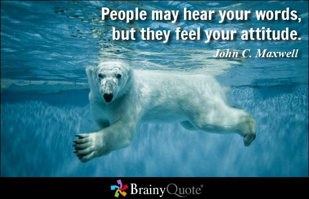 87 John C Maxwell Quotes Inspirational Quotes At Brainyquote Polar Bear Bear Polar