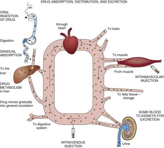 effetti anabolici testosterone