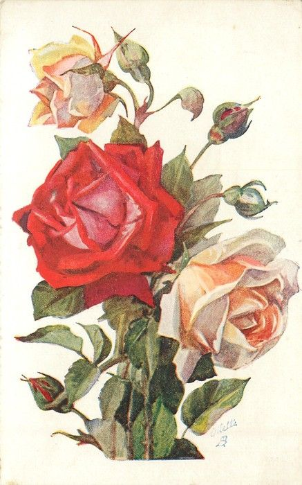red & peach roses & buds