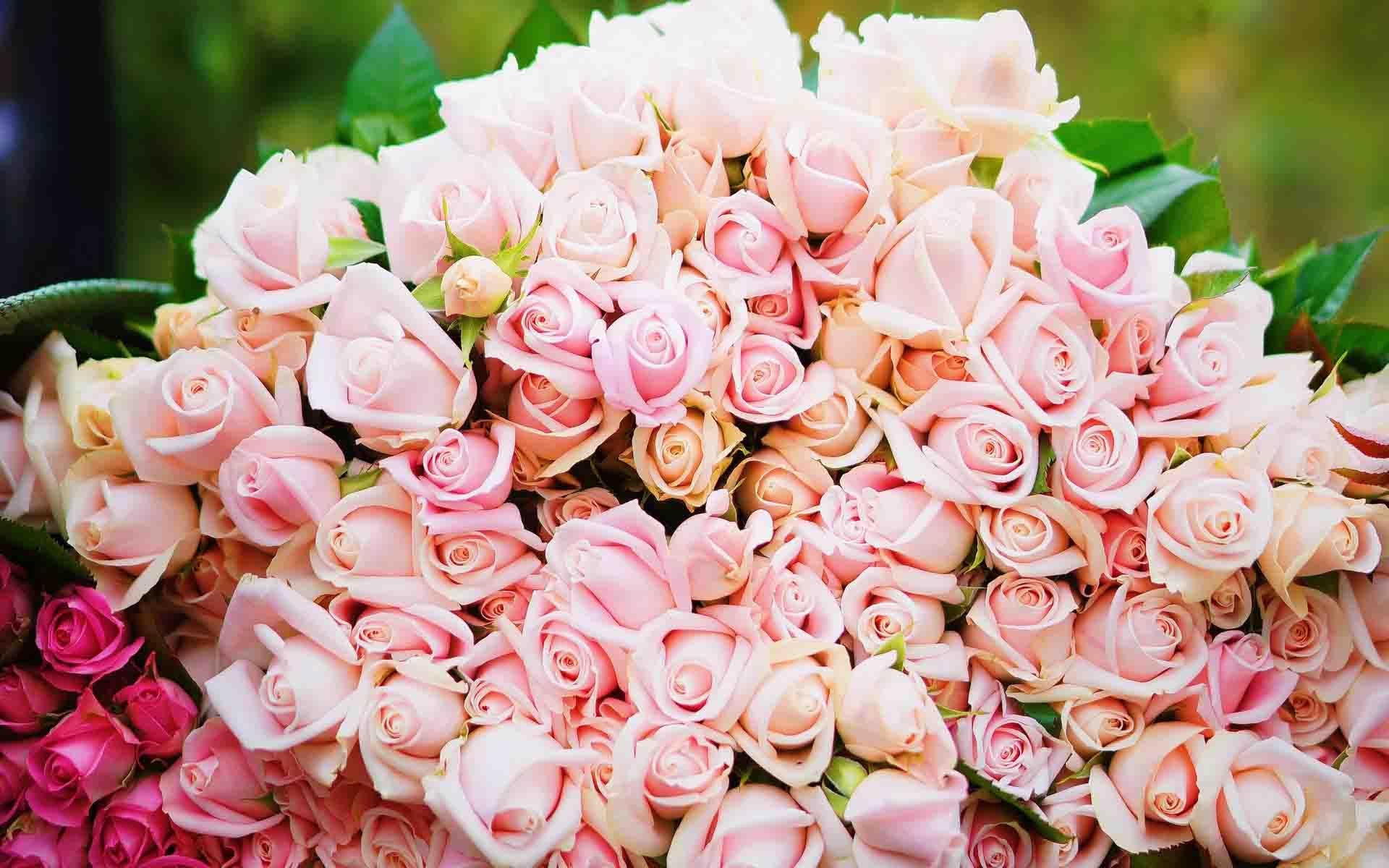Tenderness Flower Wallpaper Wallpaper Stores Flowers