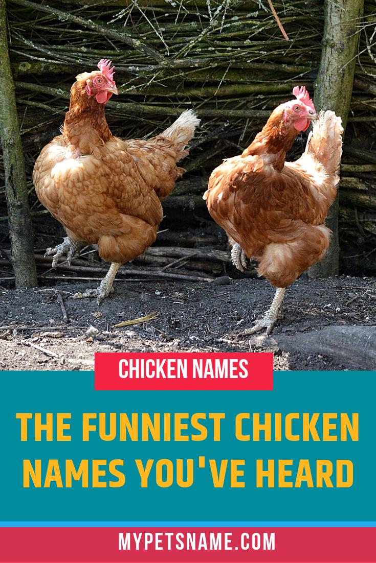 Funny Chicken Names Chicken Names Funny Chicken Names Chicken Humor