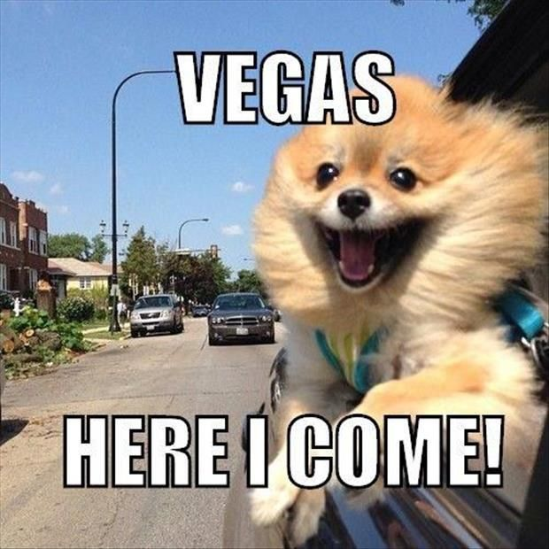 63a844639e0a18ad1e4019290c953240 ladies, and the countdown to vegas begins! who's ready to fuck