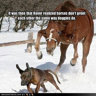 Ultimate Dog Tease Funny Horse Memes Horse Quotes Funny