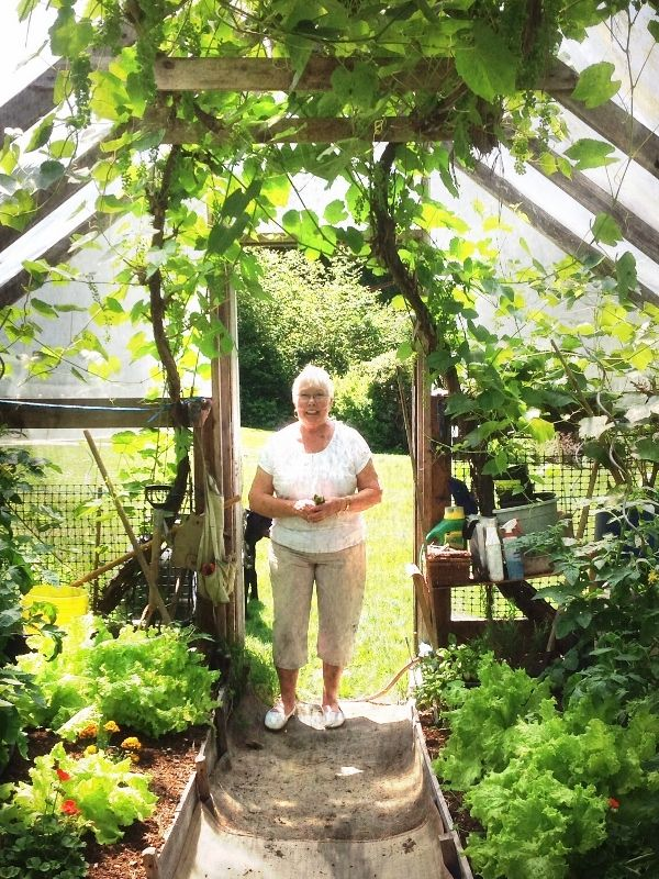 my mom in her homemade greenhouse  the grapes growing across the roof inside offer much needed