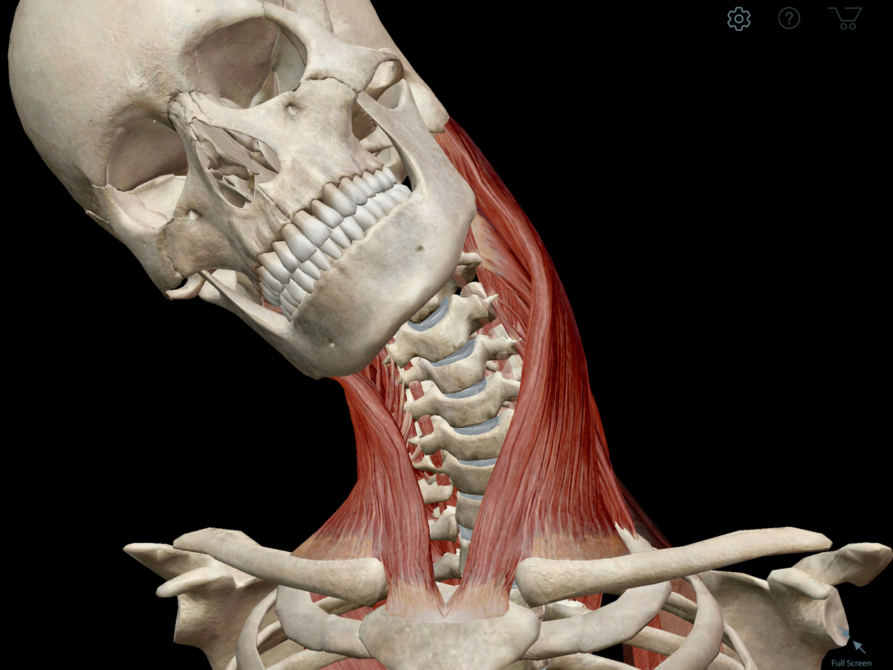 sternocleidomastoid-muscle-movement.png | Pain :( | Pinterest ...