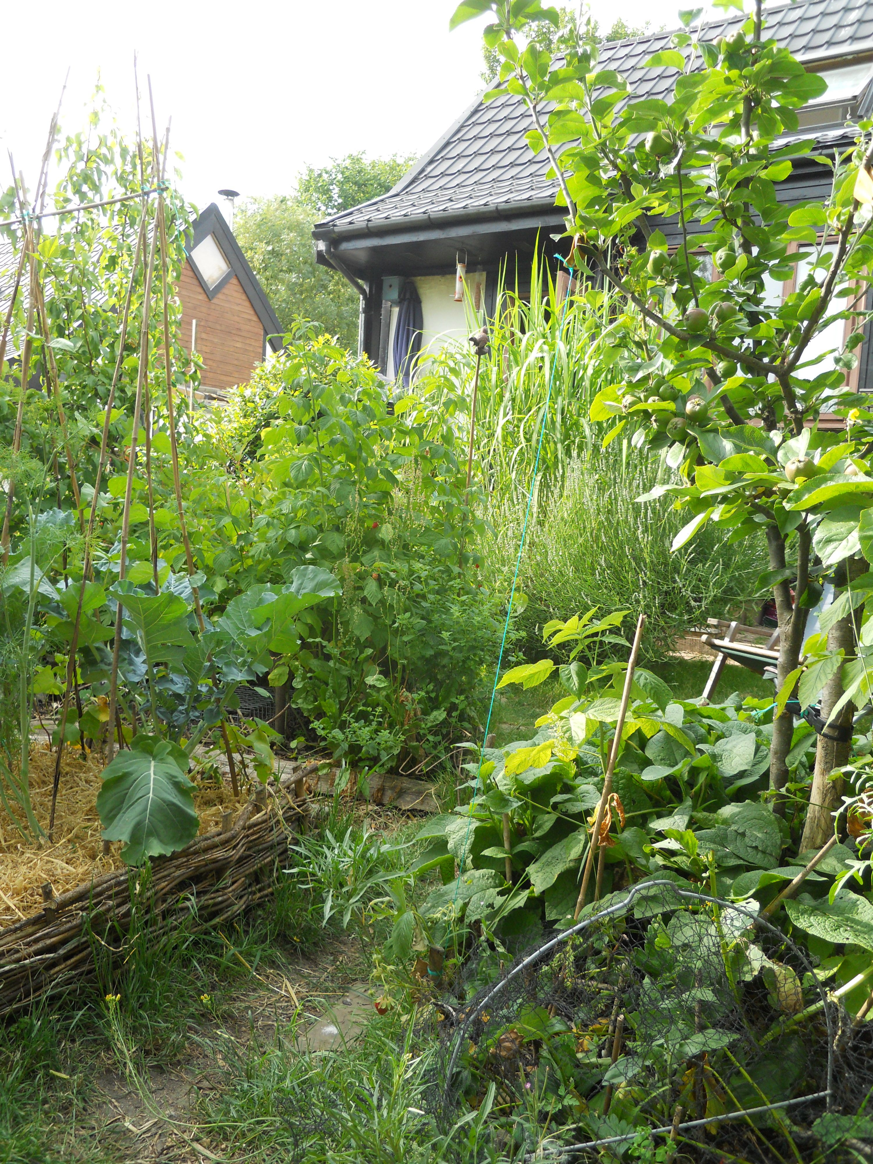 A view from the bottom of my little garden towards the for Little garden imports