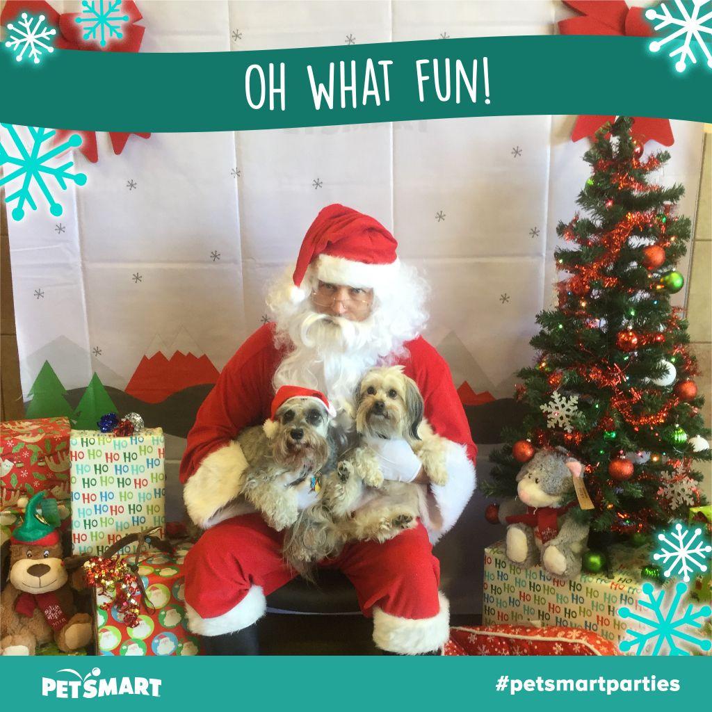 Heres my pet photo animal photo petsmart pets