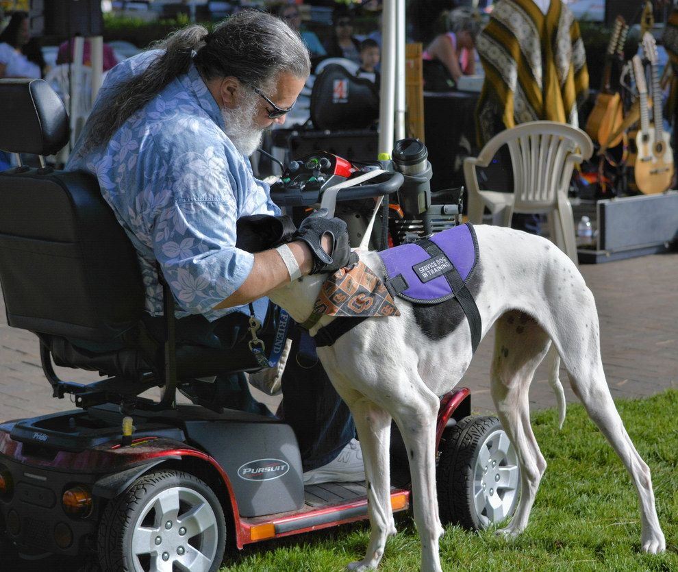 how much does it cost to train a dog for emotional support
