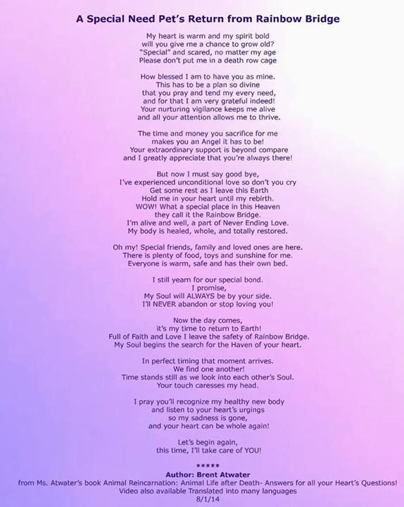 Pin By Anthony D On Pawprints On My Heart Rainbow Bridge Pet Loss Grief Pet Remembrance