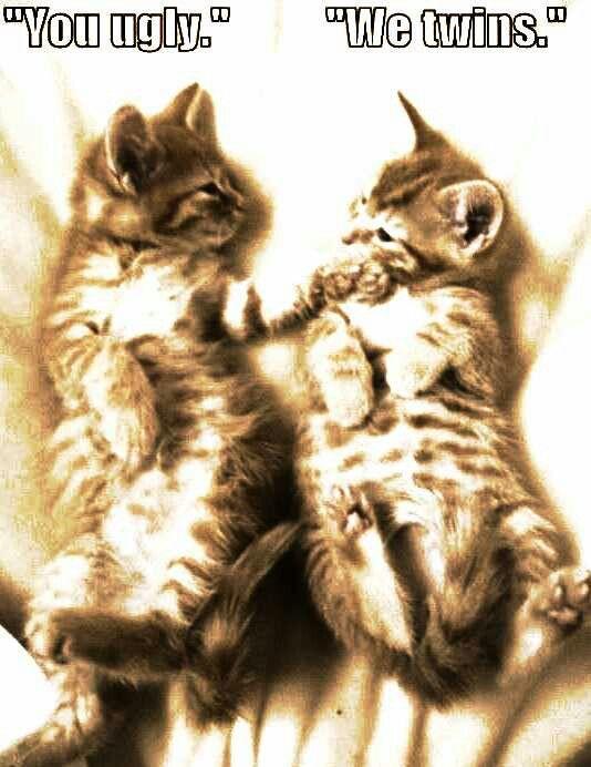 Pin By Keela Hood On Funny Funny Animal Jokes Funny Cat Photos