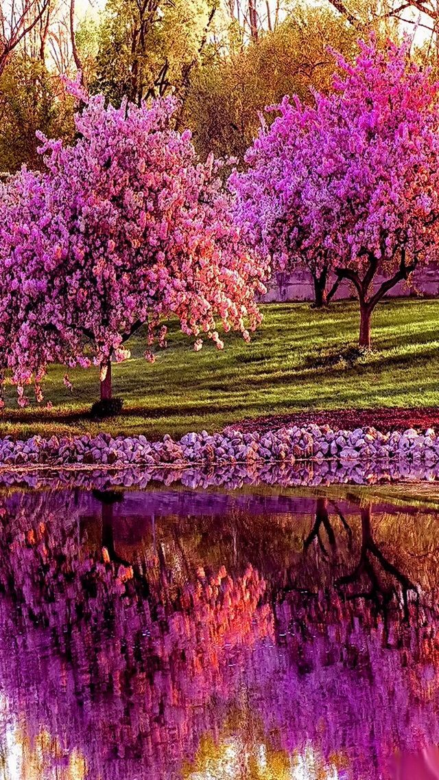 Pretty (With images) | Beautiful landscapes, Spring wallpaper, Spring desktop wallpaper