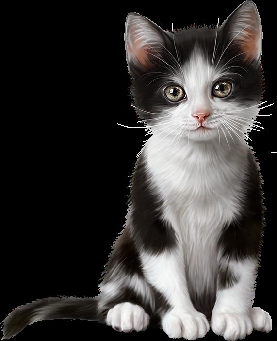 котята,кошки,cat,gato,Katze,katter,kettir,cait,