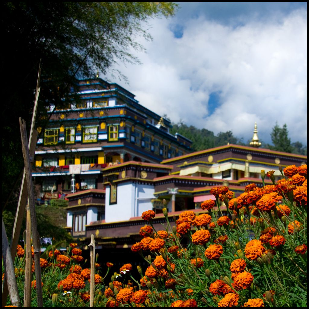 The monastery is currently the largest in Sikkim and belongs to the Kagyu linage of Tibetan Buddhism. A Golden Stupa contains the relics of the 16th Karmapa.