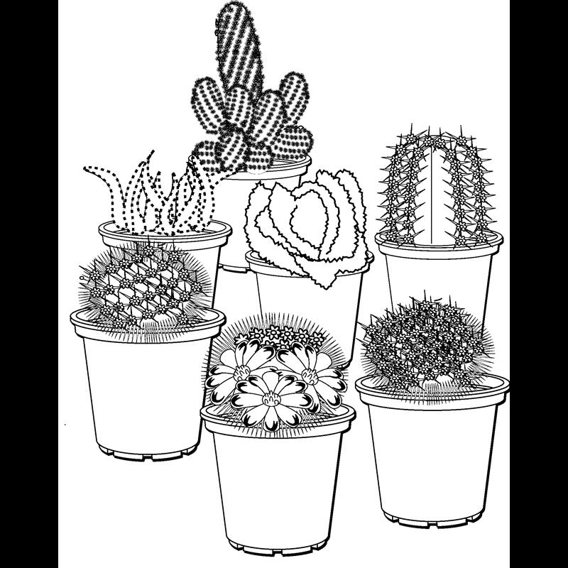 раскраска кактус в горшке тому всевозможные группы