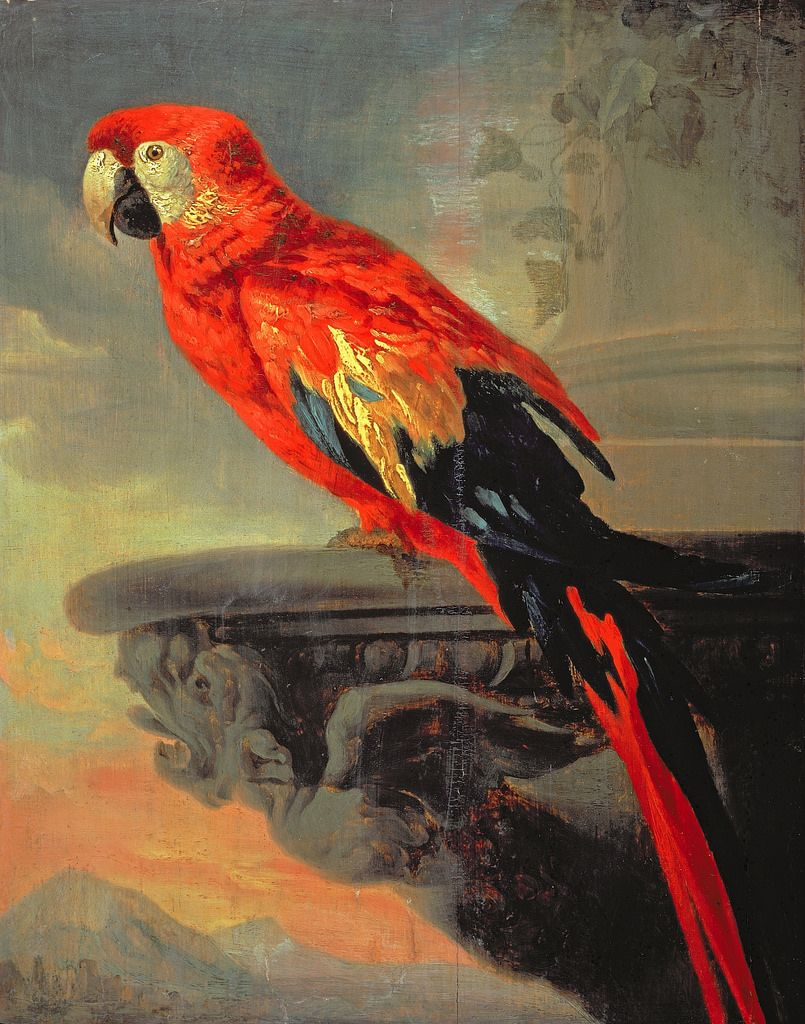 Popugaj 47 H 37 Sm London Institut Iskusstv Kurto Rubens Paintings Parrots Art Peter Paul Rubens