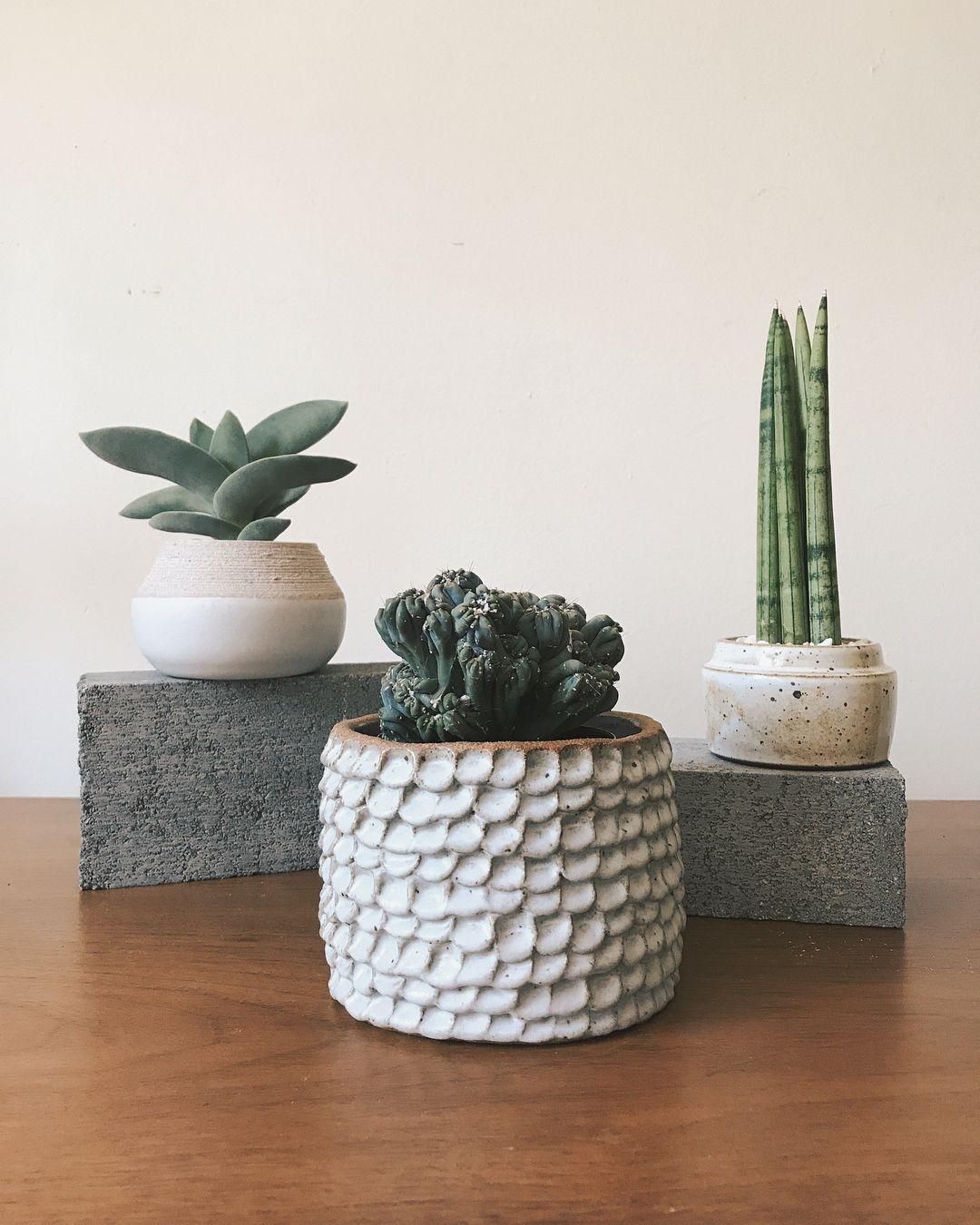 Handmade Ceramic Planters With Sansevieria And Cactus Plants Gina Zycher Ginazycher Com Handmade Ceramic Planters Handmade Clay Pots Ceramic Flower Pots