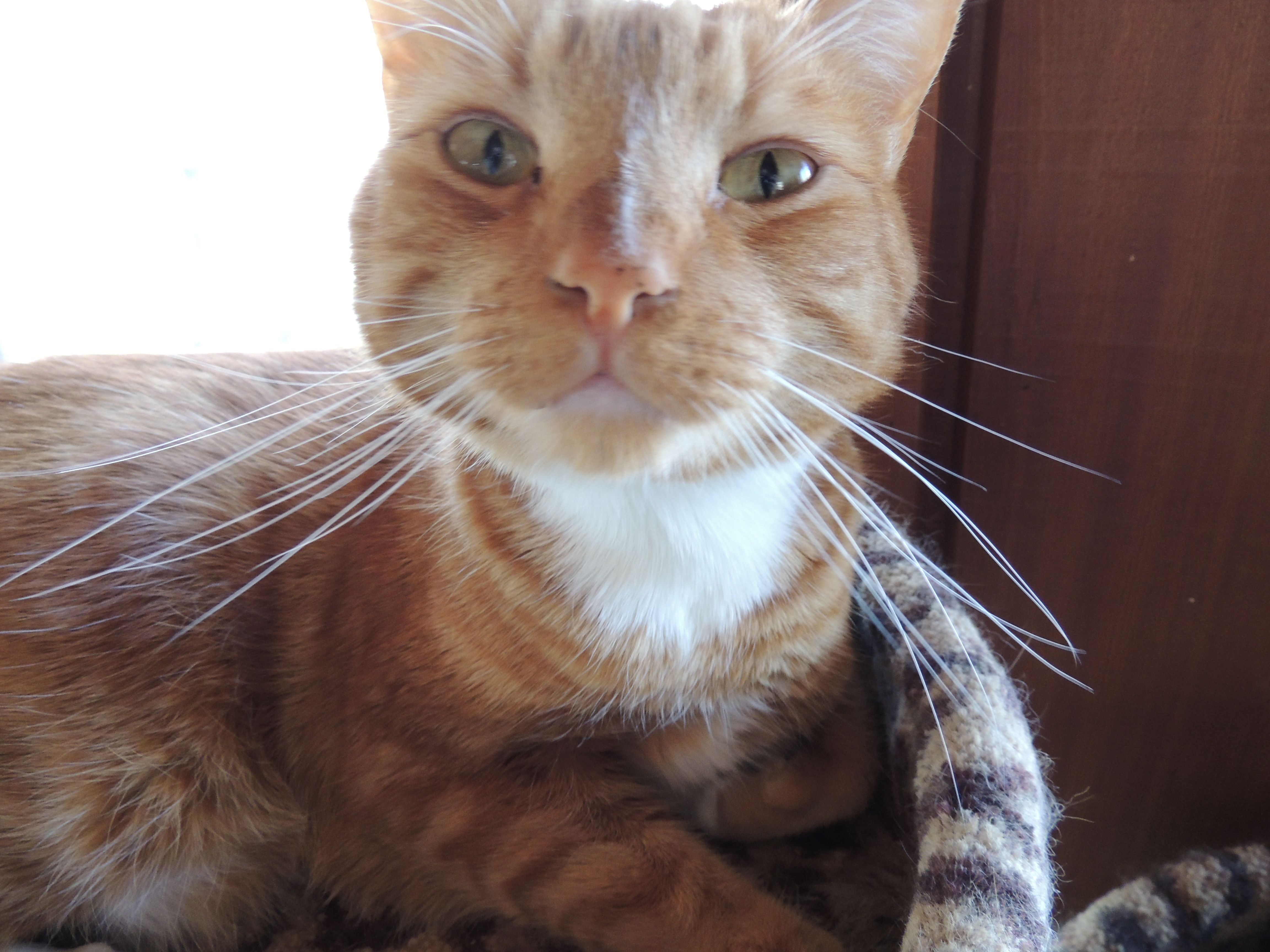 Color cats like - Orange Soft Paws Are The Perfect Harmony For Marmalade Cats Like Luke Here