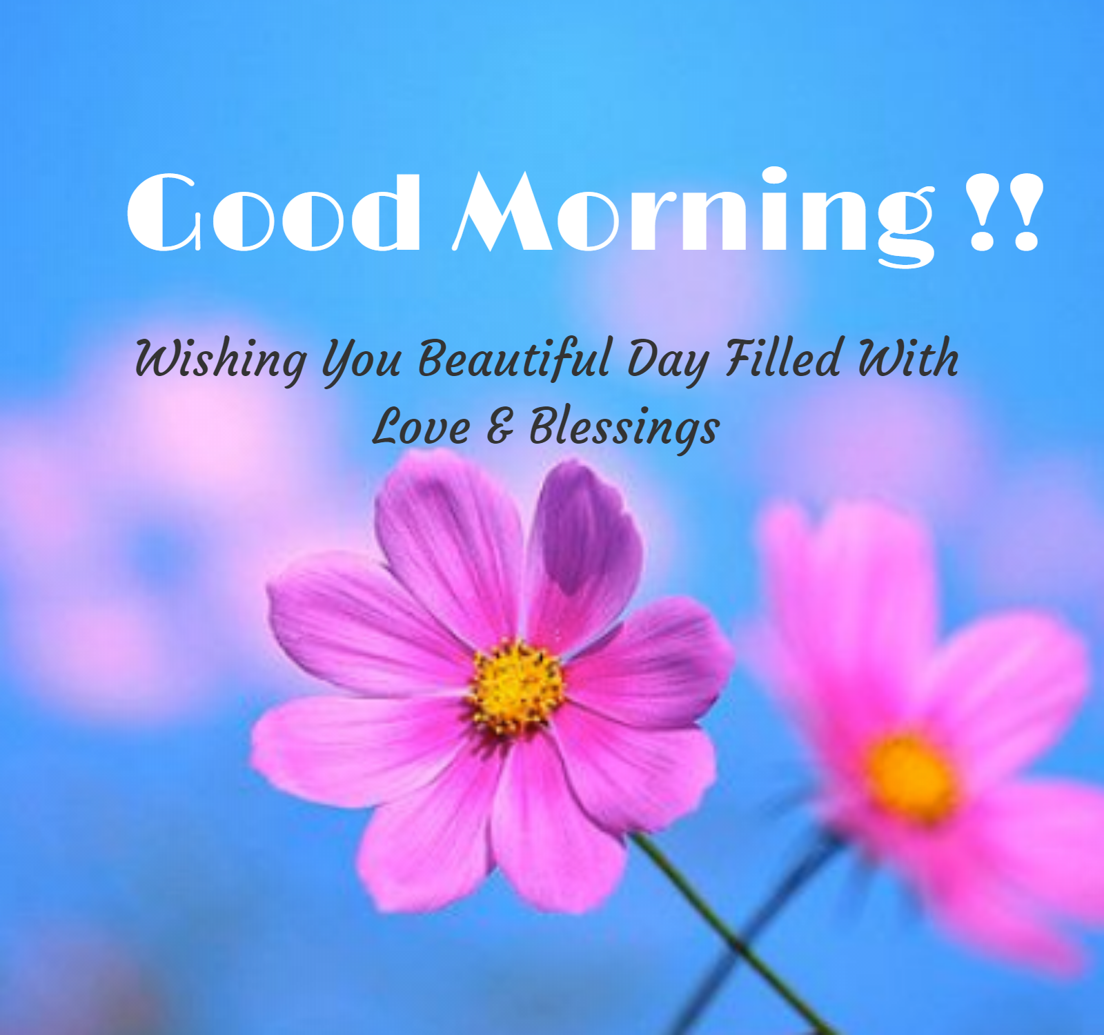 Good Morning Flowers Good Morning Messages Good Morning Images Morning Images