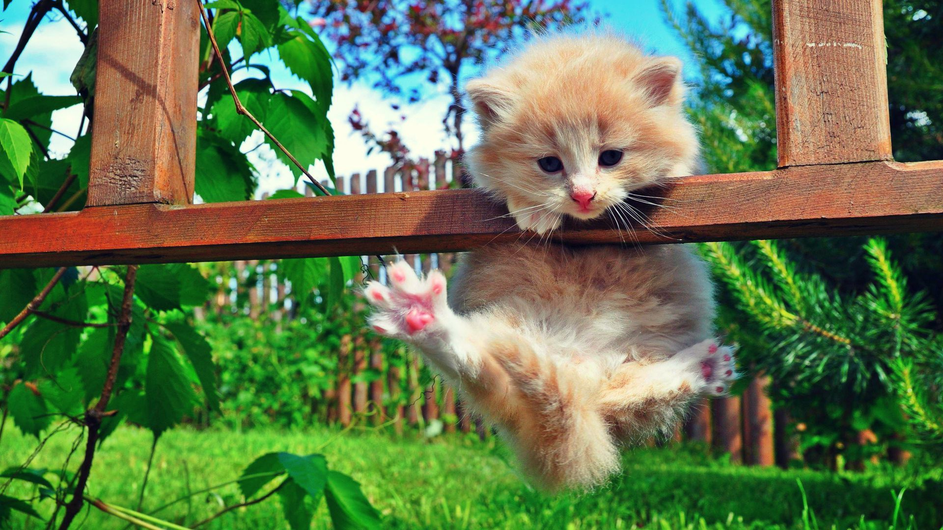 Cat hanging on fence. Funny kitten pic. Kittens cutest