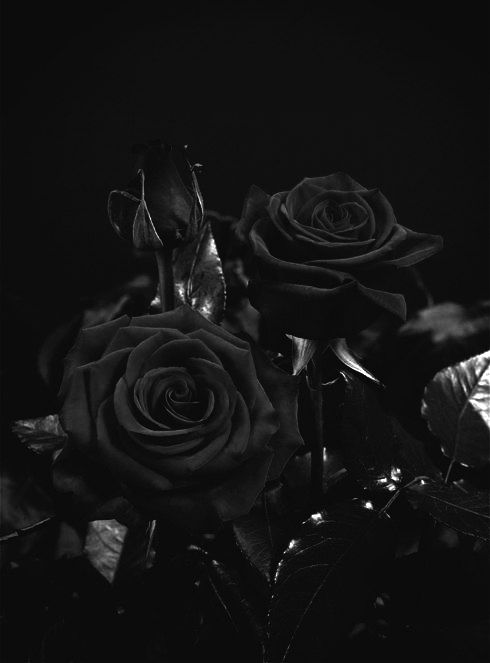 Death is the brother of sleep photo pinterest red death is the brother of sleep photo beautiful flowers red flowers mightylinksfo