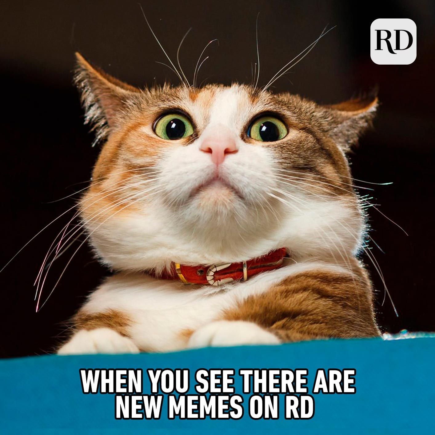40 Funny Animal Memes You Can T Help But Laugh At Funny Animal Memes Happy Animals Animal Memes