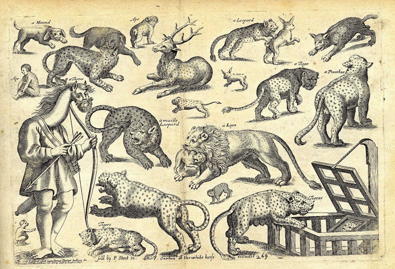 январе картинки с древними животными и растениями камера